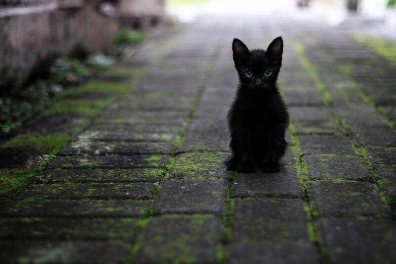 黒 猫 アミュー
